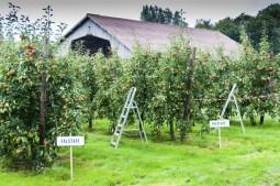 #applepicking – Apfelpflücken auf Instagram