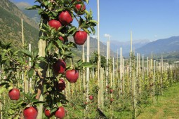 Apfelland: So schmeckt Südtirol