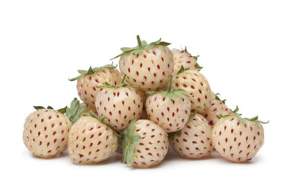 Pineberrys Ananaserdbeere