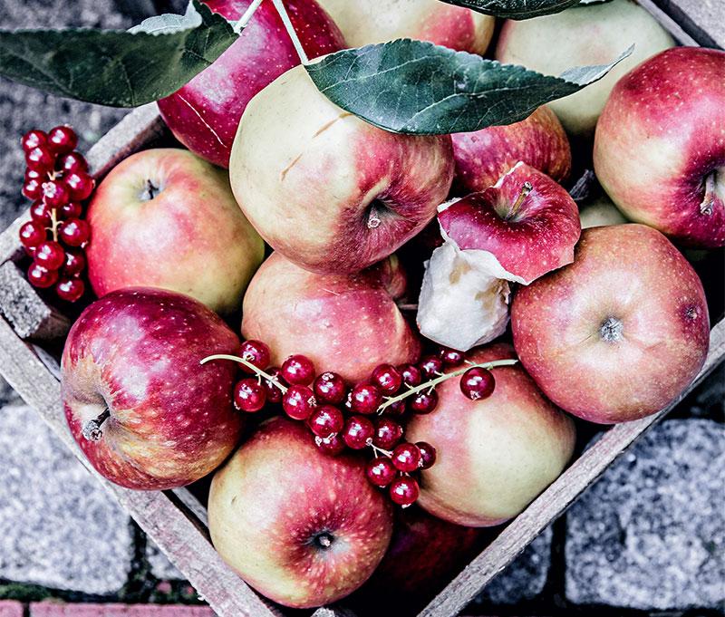 Frische Äpfel passend zum selbstgemachten Apfelkuchen