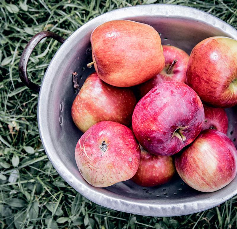 Rote Äpfel für die Zubereitung von Apfelkuchen und Apfelstrudel