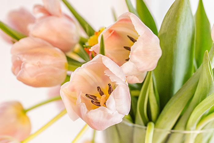 Blumendeko mit Tulpen passend zu Kuchen zu Ostern