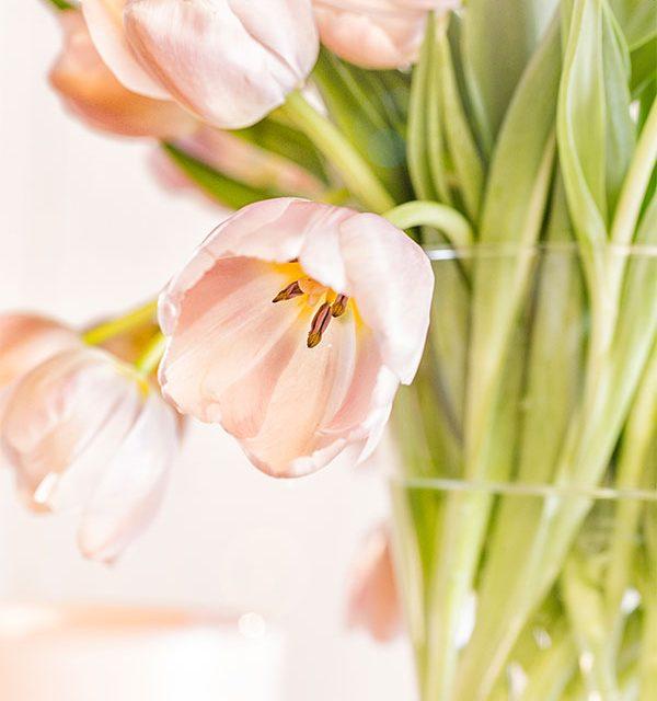 Tulpen dekoriert für den Osterbrunch